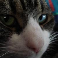 38 Bachblüten bezogen auf Katzen | Spawnbob / pixelio.de