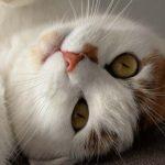 38 Bachblüten bezogen auf Katzen