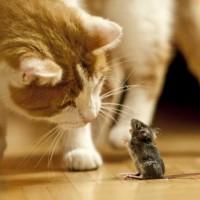 Liebe kommt nicht aus der Dose! Sie möchten frische Lebensmittel? Ihre Katze auch!