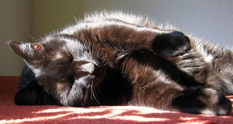 narkose bei katzen aufwachen nachwirkungen. Black Bedroom Furniture Sets. Home Design Ideas