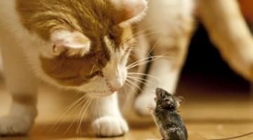 Appetenzhandlungen bei Katzen / Foto: Andreas Zöllick/Pixelio.de