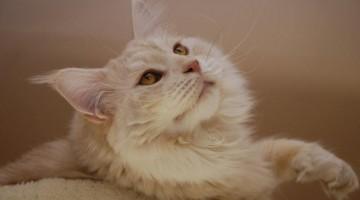 Arthrose bei Katzen / Foto: Gabriela P. / Pixelio.de