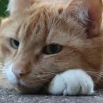 Bachblütentherapie bei Katzen | Foto: Ella Wenzgol