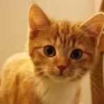 Paarung und Trächtigkeit bei Katzen | Foto: Ella Wenzgol