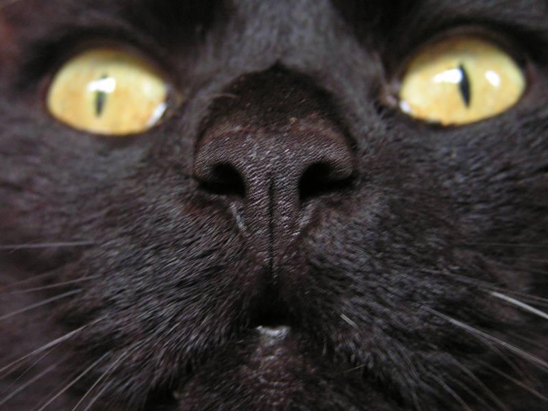 Die Dämonisierung der Katze | Foto: Jürgen Acker/pixelio.de