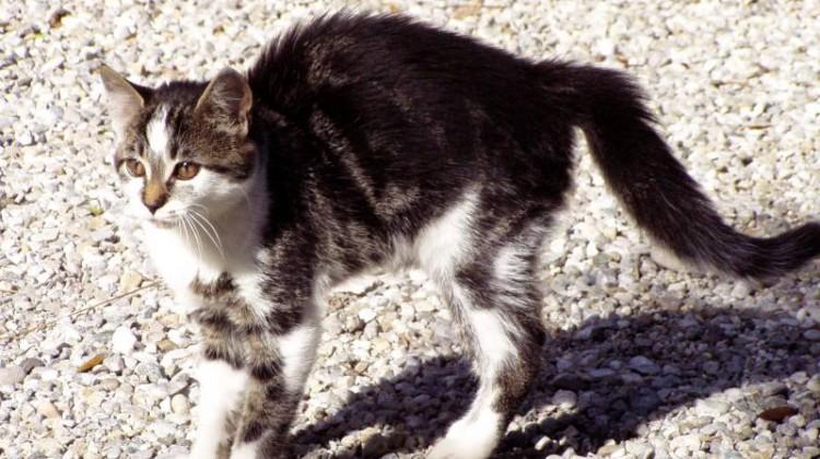Drohgebärden bei Katzen | Alexandra Rascheff/pixelio.de