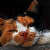 Katzenfutter Bestandteile | Foto: sokaeiko / pixelio.de