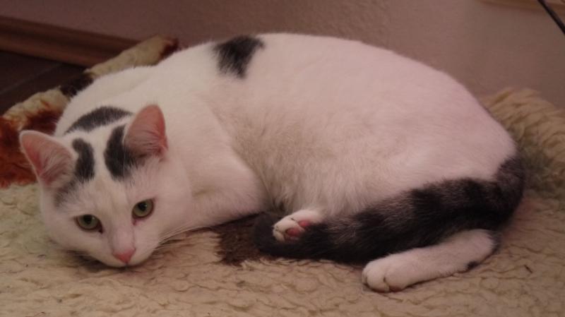 Euthanasie bei Katzen