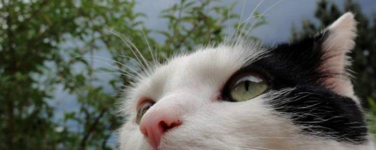 Haben Katzen den sechsten Sinn? Foto: Dr. Stephan Bart / pixelio.de