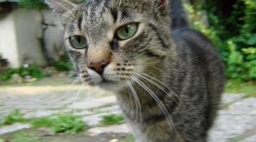 Haustier verschwunden | Foto: Andreas B./pixelio.de