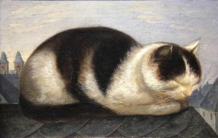 Hermann Franz Anschütz, Katze