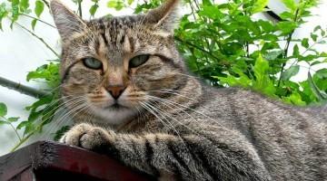 Homöopathie bei Katzen | Foto: Jürgen Klüh/pixelio.de