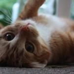 Geschlechtsreife bei Katzen - Foto: Ella Wenzgol