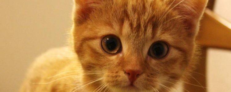 Impfung bei Katzen | Foto: Ella Wenzgol