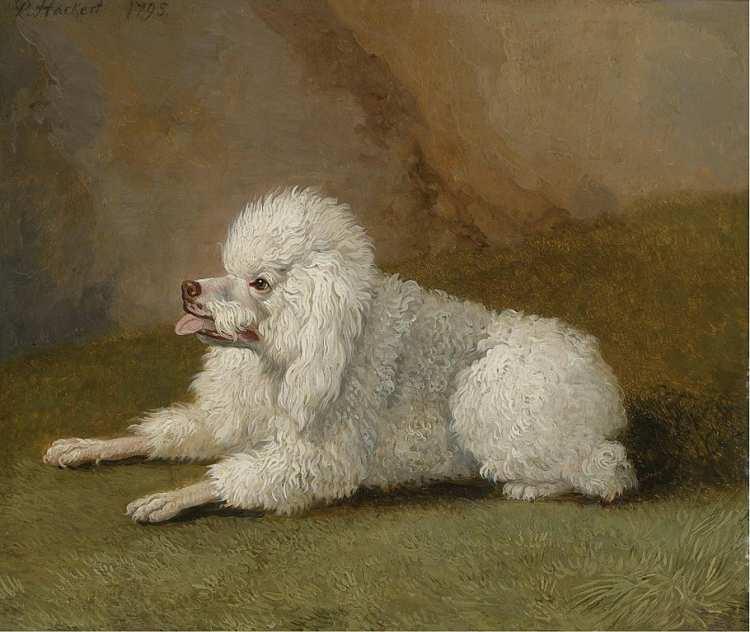 Jacob Philipp Hackert | Porträt eines Pudels, 17955