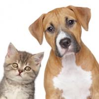 Tierische WG-Mitbewohner: Katzen und Hunde sind die beliebtesten Haustiere in Wohngemeinschaften