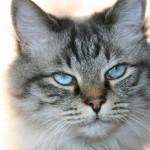 Katzenforscher Paul Leyhausen
