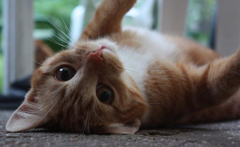 nierenerkrankung bei katzen symptome