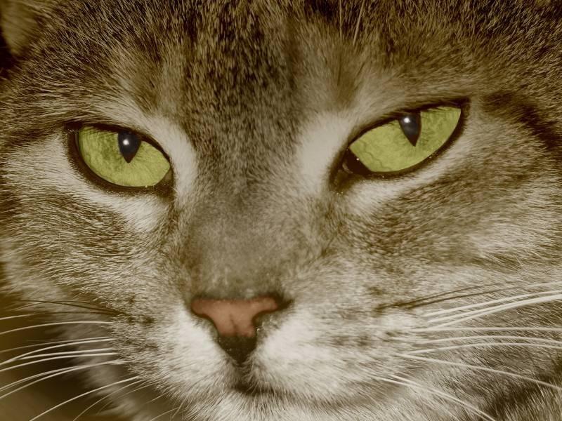 Katzenseuche / Foto: Gitti Moser / pixelio.de