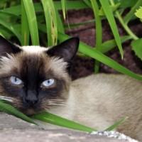 Die geheimnisvolle Katze – Katzenverhalten