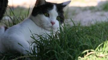 Parasitenbefall bei Katzen