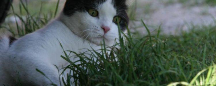 Parasitenbefall bei Katzen | Foto: Jule-Bu/pixelio.de