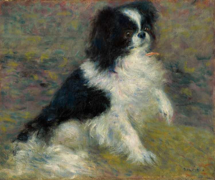 Pierre-Auguste Renoir | Tama, the Japanese Dog, c. 1876 | Bild mit freundlicher Genehmigung des Clark Art Institute. clarkart.edu