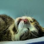 Das Schnurren der Katze | Anja Skeide/pixelio.de