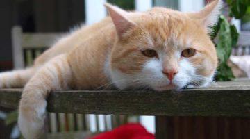 Tipps für Harmonie im Katzenhaushalt