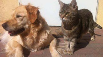Tiererwerb im Ausland – Meiden Sie dubiose Tierverkäufer