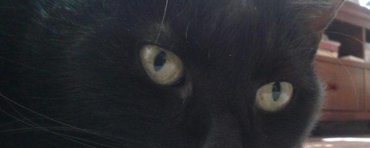 Vom Tierquäler zum Gewalttäter | Catplus.de