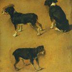 Adriaen van de Velde | Studies of a Dog | Photo credit: Cannon Hall