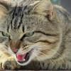 Aggression bei Katzen