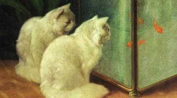 Arthur Heyer | Weiße Katzen beobachten Goldfische