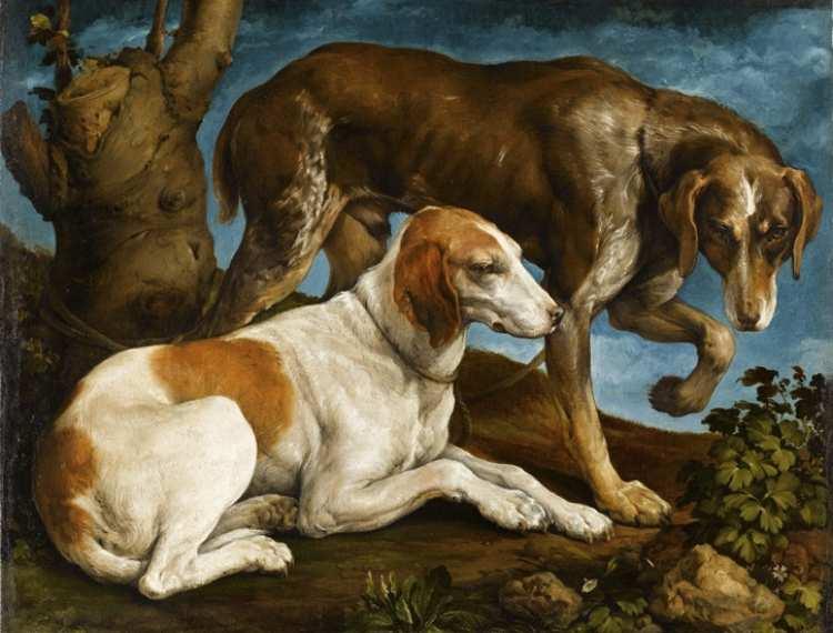 Jacobo Bassano   Two Hunting Dogs, 1548   Museu Nacional d'Arte de Catalunya, Barcelona