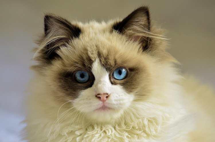 Blasenentzündung (Zystitis) bei Katzen