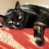 Nana - Unsere Katzendame