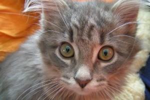 Tierarztbesuch ohne Stress