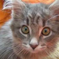 Weltkatzentag: TASSO e.V. fordert weitreichenden Schutz für Katzen