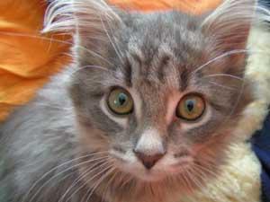 Foto: Catplus.de