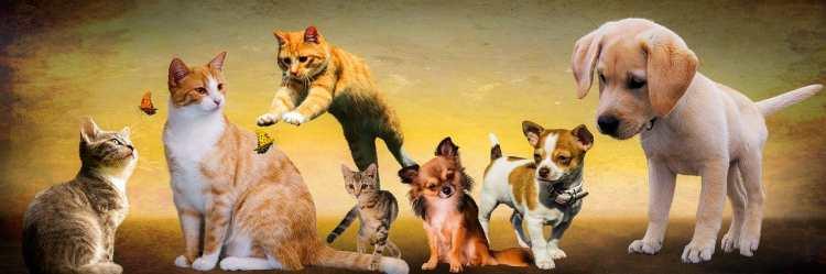 COVID-19: Hund und Katze sind nicht gefährdet