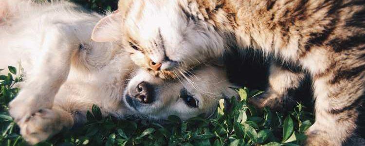 Der Tierfreund