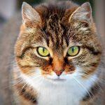 Diabets bei Katzen