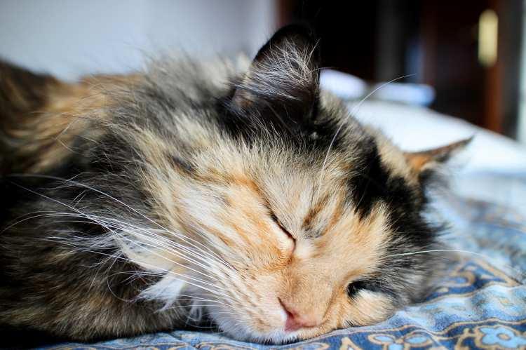 Die kranke Katze - Anzeichen