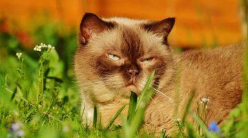Die kranke Katze