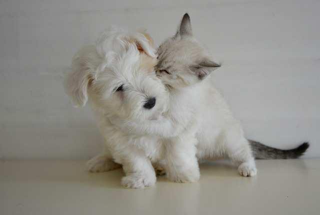 Fellwechsel bei Katze und Hund
