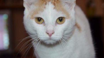 Fixierende Blicke bei Katzen