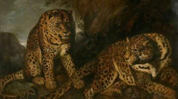 Frans Snyders | Liegende Leoparden