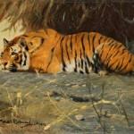 Friedrich Wilhelm Kuhnert | Liegender Tiger, 1912