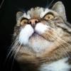 Geruchsinn der Katze